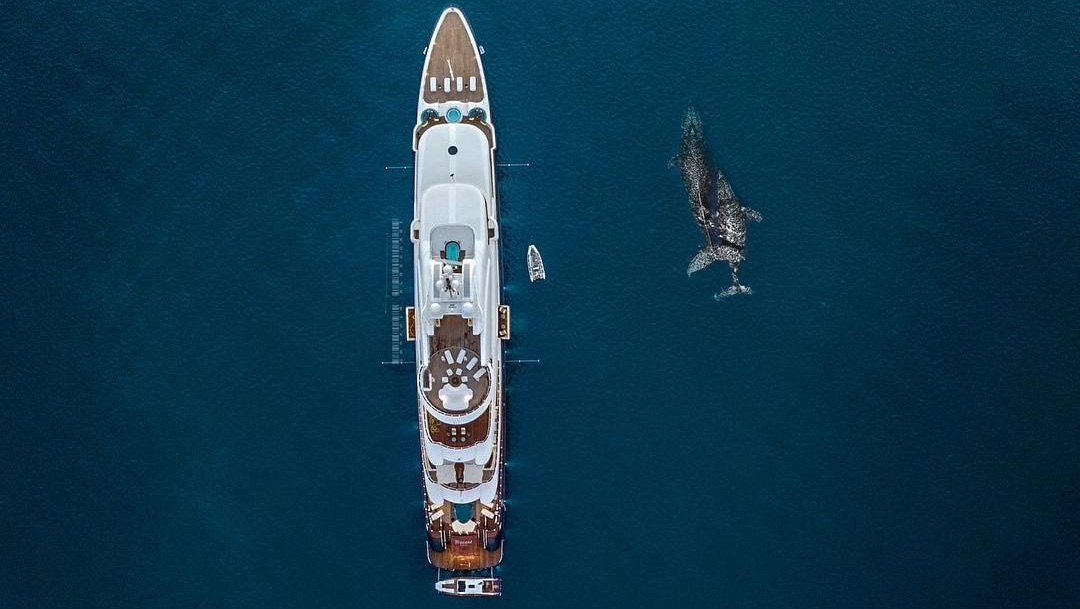 Whales by superyacht