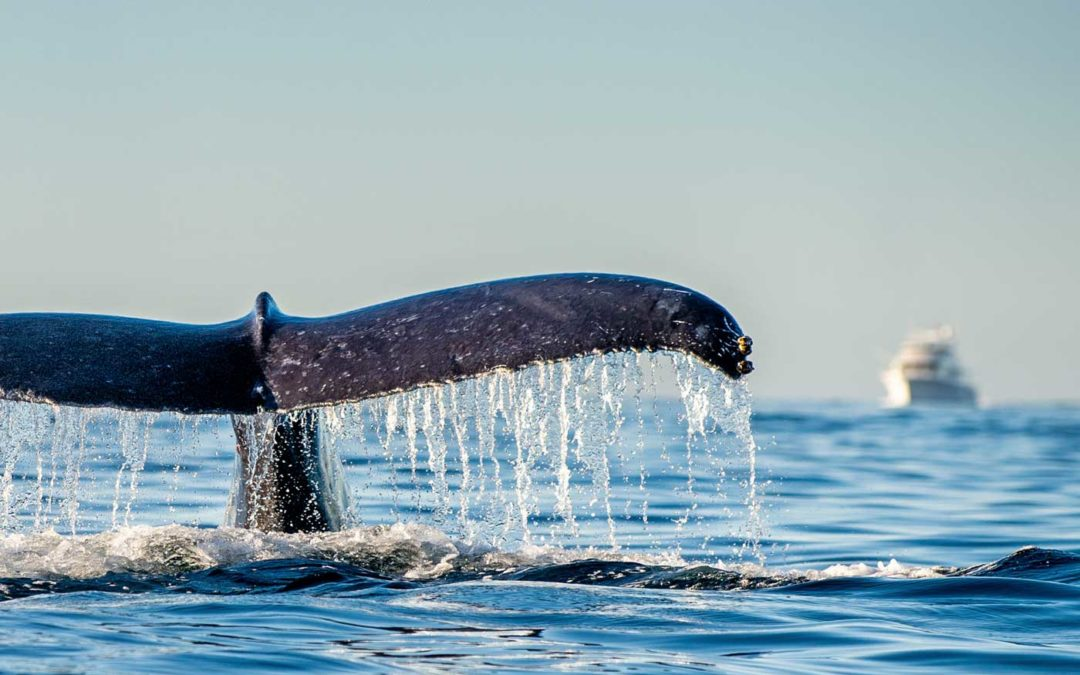 We're raising funds for the Important Marine Mammal Areas programme